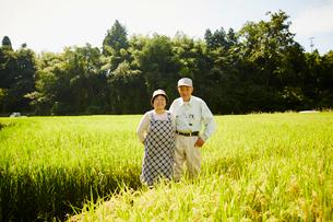 稲田に立つ農家夫婦の写真素材 [FYI02617064]