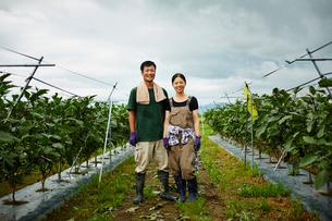 ナス畑に立つ農家夫婦の写真素材 [FYI02617081]