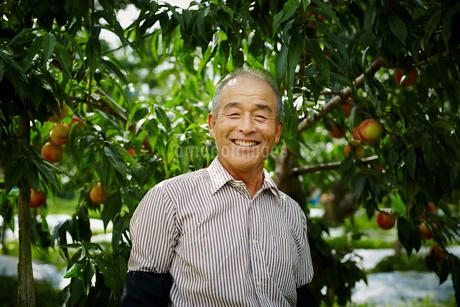 モモ畑の笑顔の農夫の写真素材 [FYI02617124]
