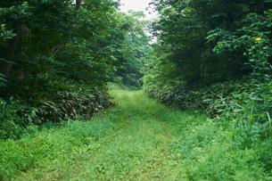 草木が茂る道の写真素材 [FYI02617294]