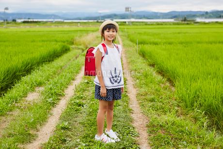 畦道に立つ小学生の女の子の写真素材 [FYI02618366]