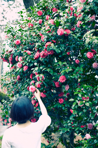 花を手にとる女性の写真素材 [FYI02619329]