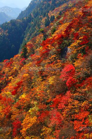 御在所岳の紅葉の写真素材 [FYI02621065]