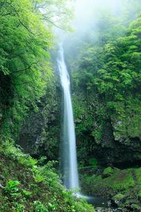 阿弥陀ヶ滝の新緑の写真素材 [FYI02621128]