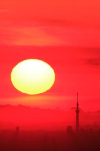 朝日が昇る東京スカイツリーと都心(遠望)の写真素材 [FYI02621191]
