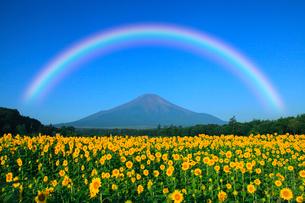 虹架かる夏の富士山とヒマワリ畑の写真素材 [FYI02622129]