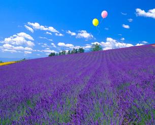ラベンダー畑と風船の写真素材 [FYI02622325]