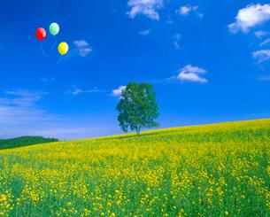 ナノハナと白樺の木、風船の写真素材 [FYI02622343]