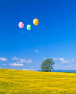 木とキガラシの花畑、風船の写真素材 [FYI02622348]