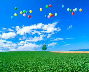 丘の木とビート畑、風船の写真素材 [FYI02622354]
