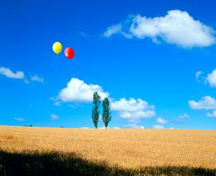 ポプラと小麦畑、風船の写真素材 [FYI02622355]