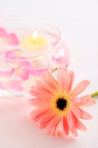 ガーベラと水に浮かぶキャンドル ミニバラの花びらの写真素材 [FYI02622493]