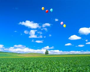 丘の木とビート畑、風船の写真素材 [FYI02622604]