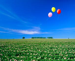 ジャガイモの花畑とマイルドセブンの丘、風船の写真素材 [FYI02622712]
