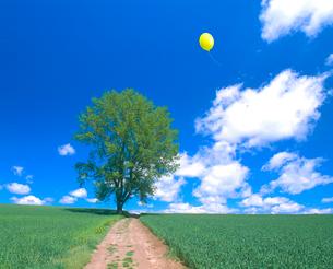 木と秋蒔き小麦畑、風船の写真素材 [FYI02623000]
