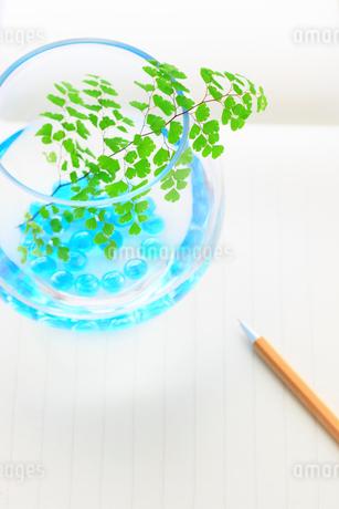 アジアンタムとビー玉 便せん ペンの写真素材 [FYI02623043]