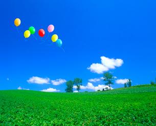パフィーの木とジャガイモ畑、風船の写真素材 [FYI02623083]