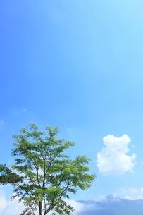 緑樹と白雲の写真素材 [FYI02623687]