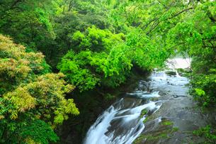 菊池渓谷 掛幕の滝の写真素材 [FYI02623776]