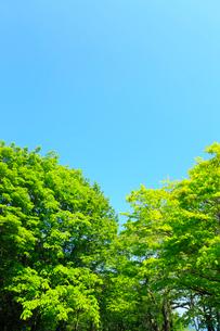 新緑と青空の写真素材 [FYI02624091]