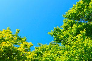 新緑と青空の写真素材 [FYI02624270]