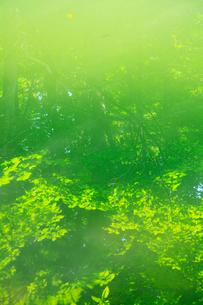 新緑の反映する水面の写真素材 [FYI02624298]