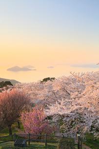 紫雲出山のサクラと瀬戸内海の写真素材 [FYI02624312]