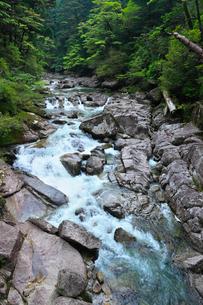 屋久島 ヤクスギランドの荒川の写真素材 [FYI02624423]
