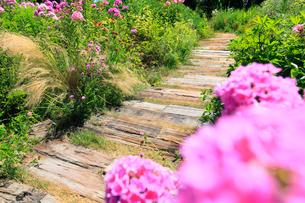 フロックスの花と小道の写真素材 [FYI02624742]