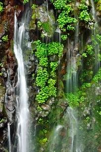 吾妻山地 新緑の幕滝の写真素材 [FYI02624768]