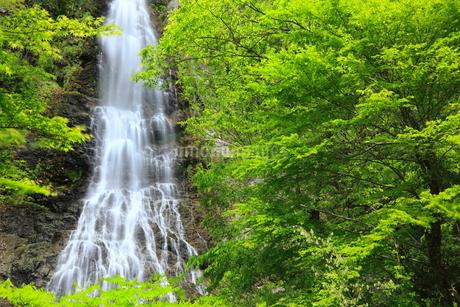 新緑と天滝の写真素材 [FYI02624797]