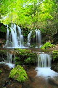 猿壺の滝と新緑の写真素材 [FYI02624827]
