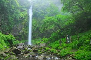 阿弥陀ヶ滝と新緑の写真素材 [FYI02624996]