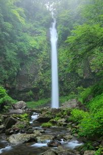 阿弥陀ヶ滝と新緑の写真素材 [FYI02625511]