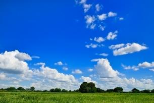 緑の草原と木立に青空の写真素材 [FYI02625872]