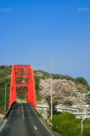 音戸大橋とサクラの写真素材 [FYI02625879]