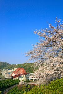音戸大橋とサクラの写真素材 [FYI02625893]
