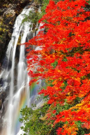 荒滝とカエデの紅葉に虹の写真素材 [FYI02626169]