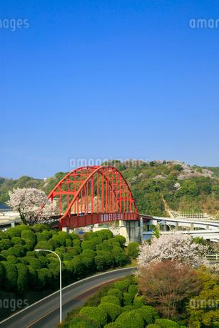 音戸大橋とサクラの写真素材 [FYI02626342]