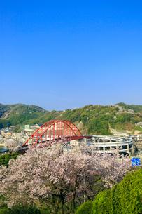 音戸大橋とサクラの写真素材 [FYI02626820]