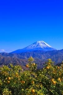 上高下よりゆずの木と富士山の写真素材 [FYI02627449]