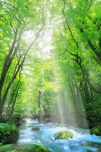 新緑の奥入瀬渓流に光芒の写真素材 [FYI02627811]