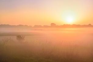荒川河川敷の霧と朝日の写真素材 [FYI02628123]