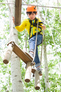 Little boy playing in tree top adventure parkの写真素材 [FYI02635271]