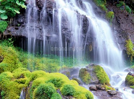 吐竜の滝の写真素材 [FYI02639594]