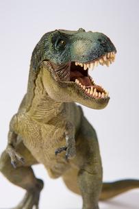 白バックの恐竜ティラノサウルスの写真素材 [FYI02639813]