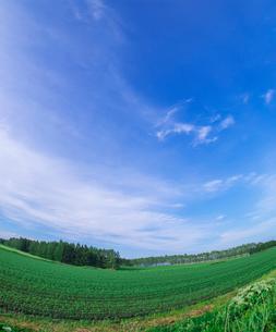 北海道 十勝平野 点景  広大な畑と青空 の写真素材 [FYI02641321]