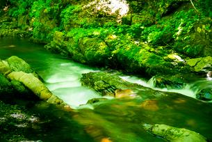 横川渓谷・新緑映す横川の清流と蛇石の写真素材 [FYI02641537]