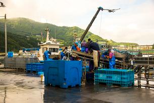 朝の女川漁港の写真素材 [FYI02641570]