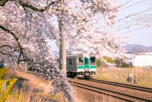 白石川堤一目千本桜JR東北本線普通列車の写真素材 [FYI02641591]